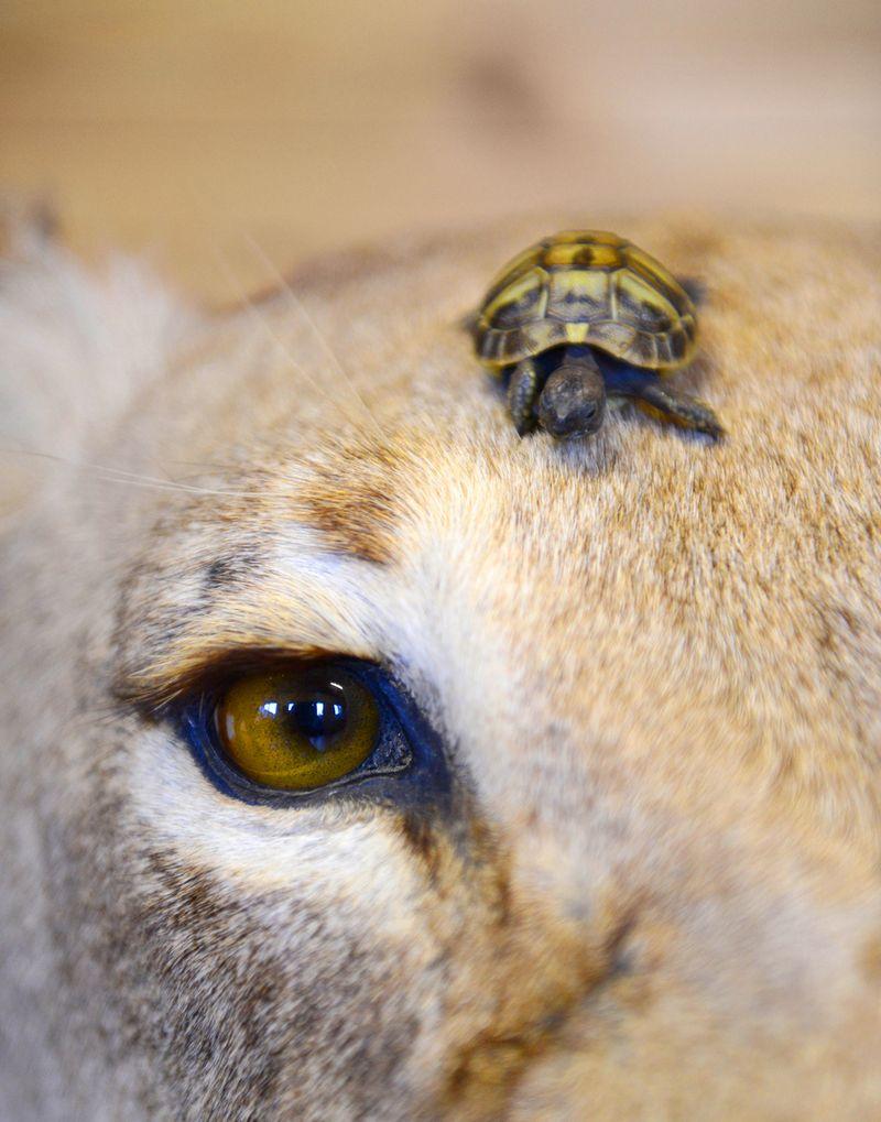 Tank-the-Tortoise