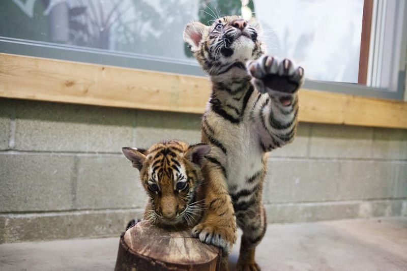 Tall paw