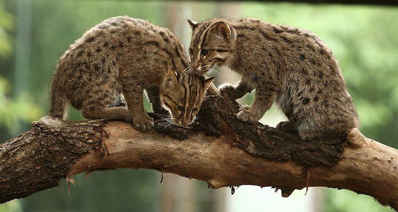 Cat branch.jpg