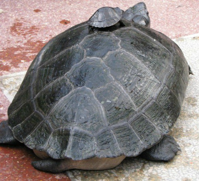 Turt on back