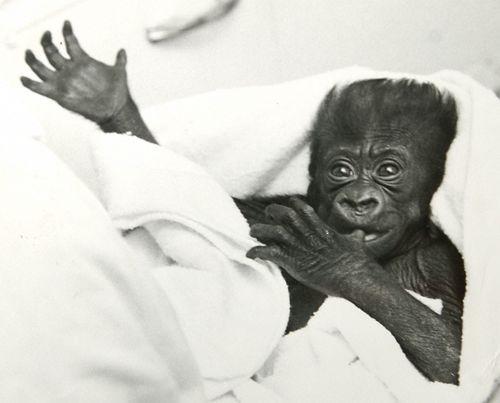 Baby Colo.2