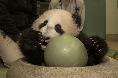 Pan ball