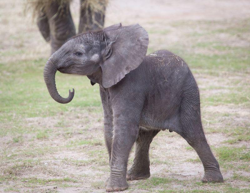 Lowry Park Zoo Elephant Little Trunk1jpg