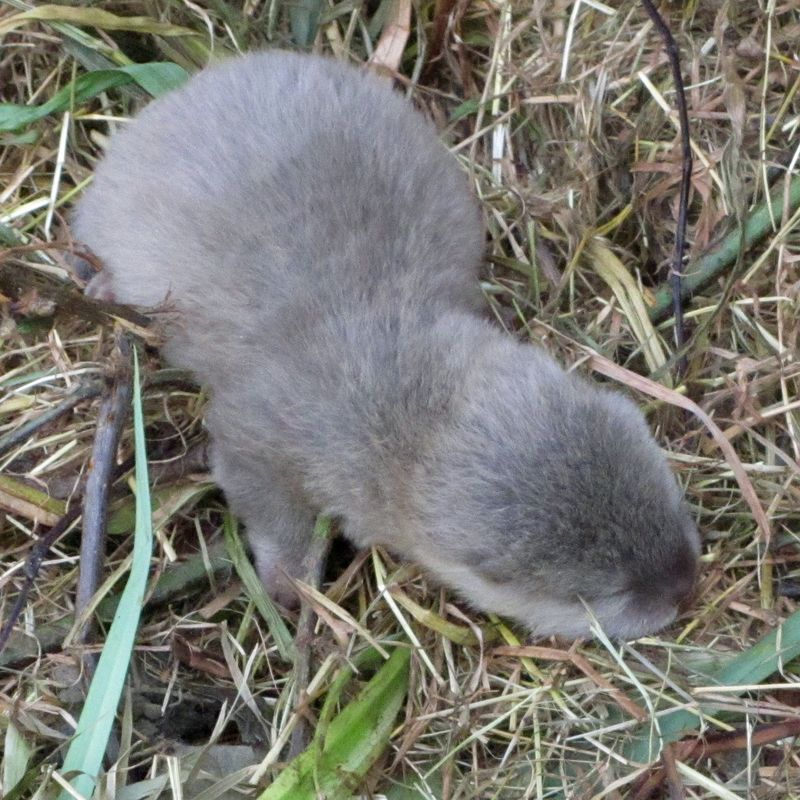 Otter-001a