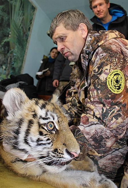 Gallery_tiger_cub