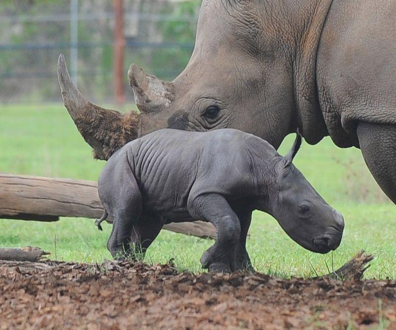 Rhino side