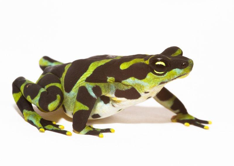 Frog green spots