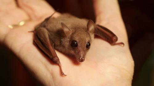 Bat hand