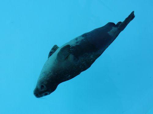 Seal 04