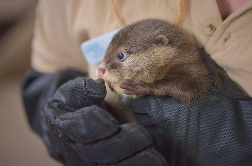 OtterPups2