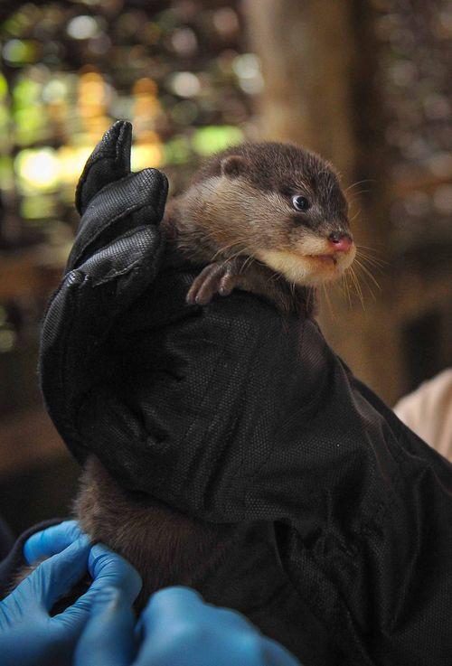 OtterPups4