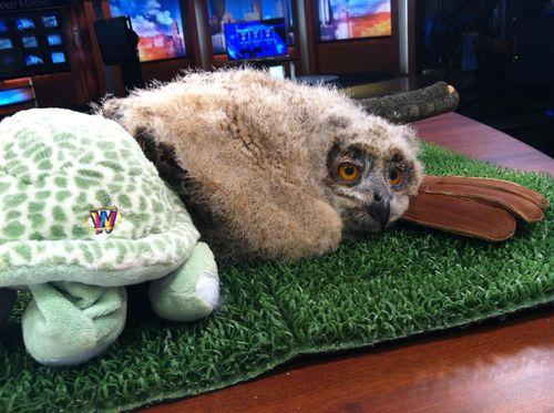 Owl rest