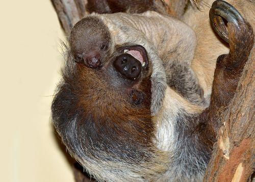 Vienna_Sloth_2