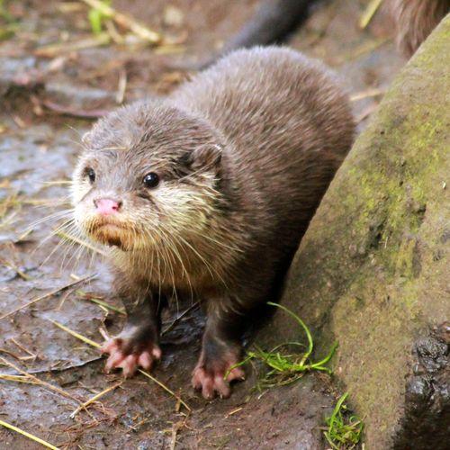 Otter_Pups3_5_10_12