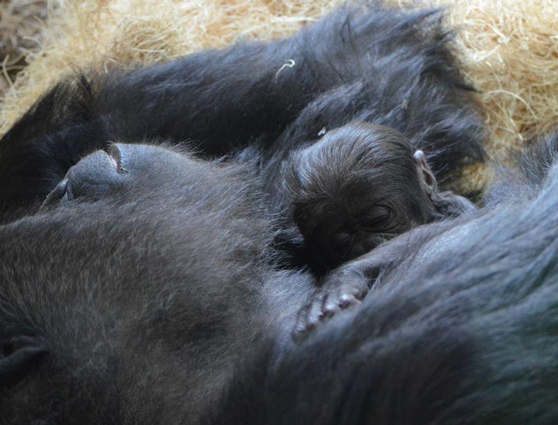 Photos credited to Tony GnauLincoln Park Zoo