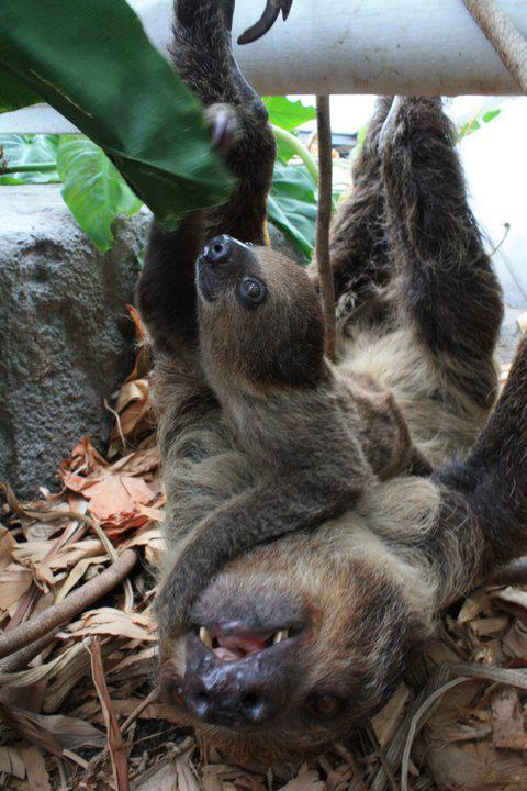 Help Name This Baby Sloth Zooborns