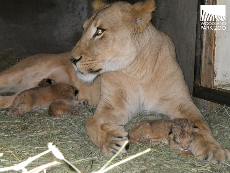 Aida and cubs 2