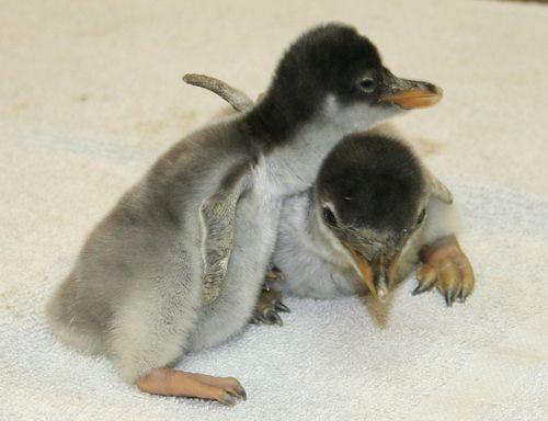 Penguins side.jpg