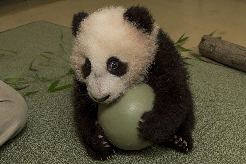 PandaBabyExam18_003_Web