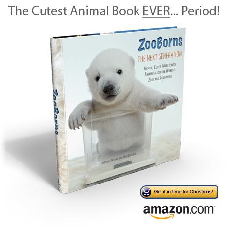 ZooBorns-The-Next-Generation2