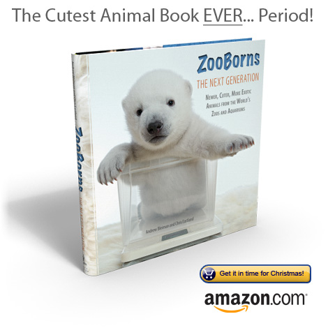 ZooBorns-The-Next-Generation2