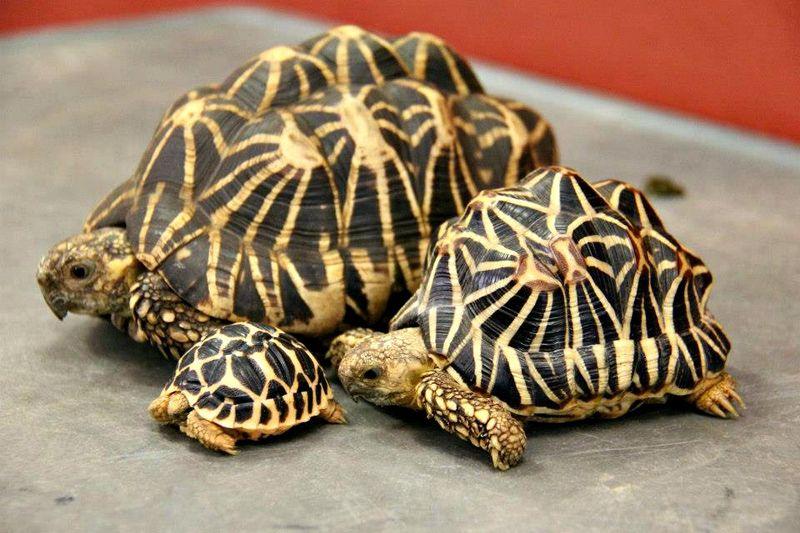 Tortoise 4