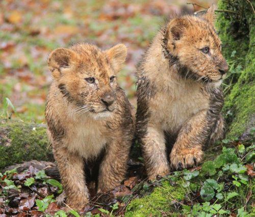 112 cubs
