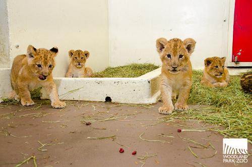 4 cubs