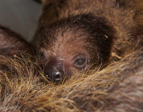 Sloth CU