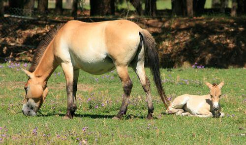 Foal sit
