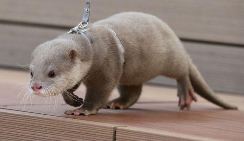 Otter 2.1