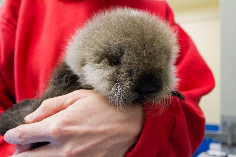 Otter CU