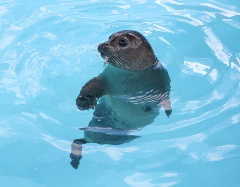 Seal 07