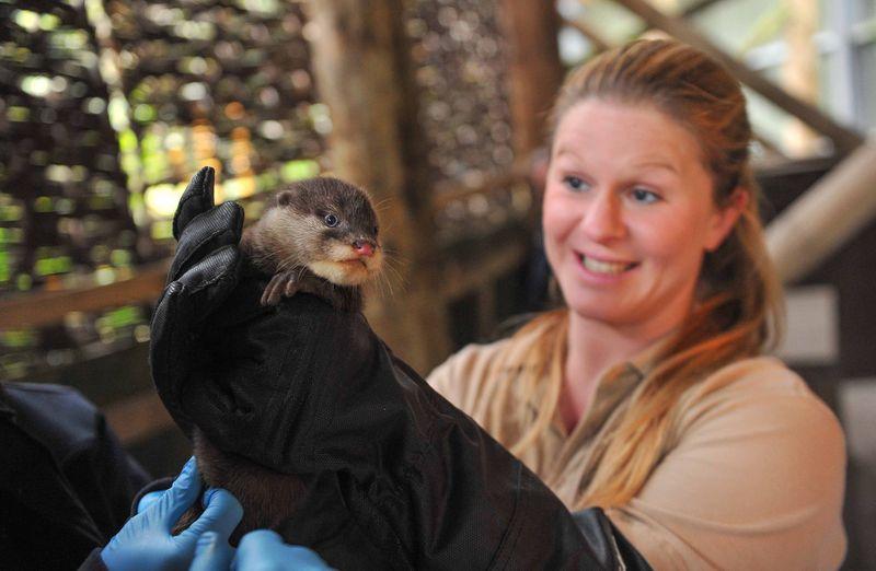OtterPups1