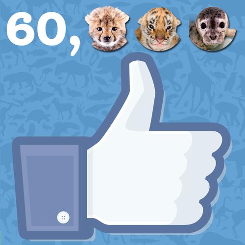 60,000-Likes