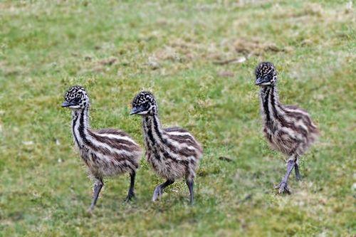 EMU 3 FB page