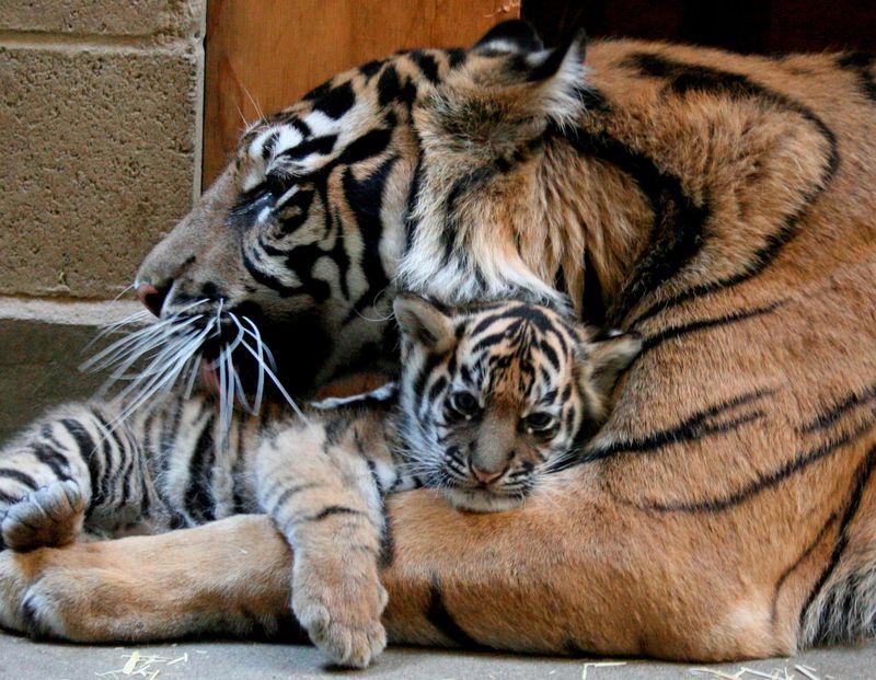 T hugs mom