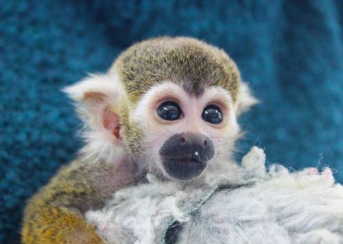 Squirrel monkeyy