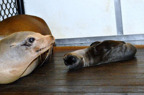 Milwaukee Sea Lion 1