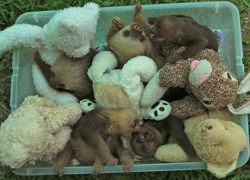 Bucket of Baby Sloths.jpg
