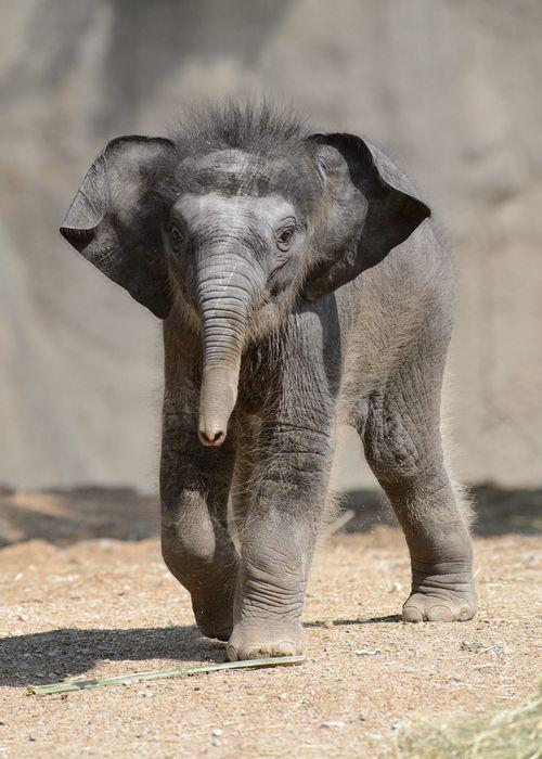 Priya_Ray Meibaum Saint Louis Zoo_5-22-13_7338_sm