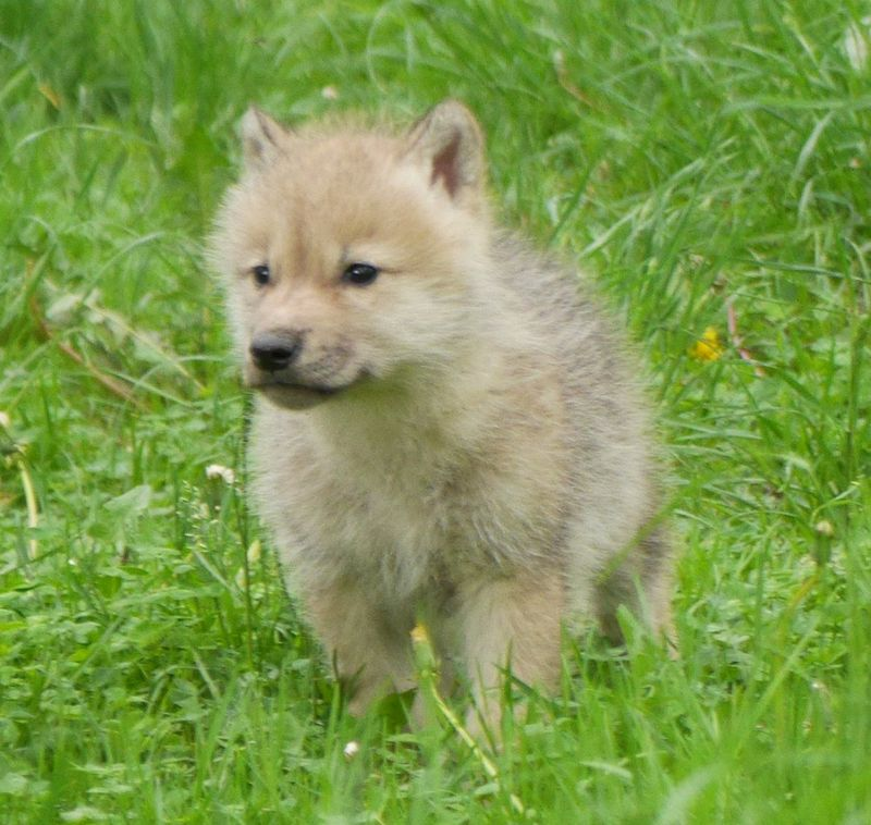 Pup solo crop