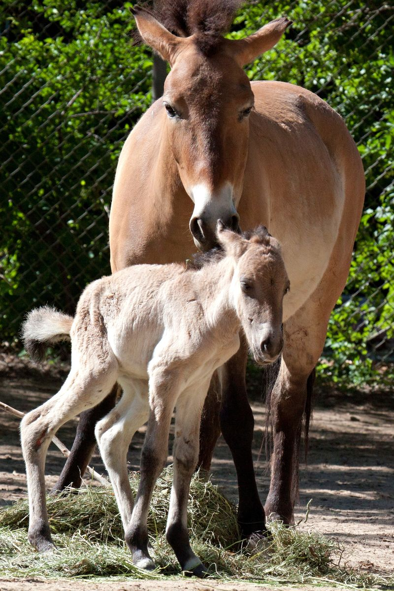 Foal and mom 1