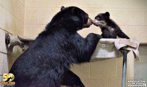 Phoenix-Zoo---by-Joseph-Becker---Andean-bear-cub---05