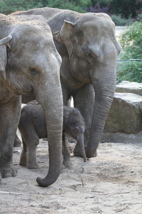 6 elephant