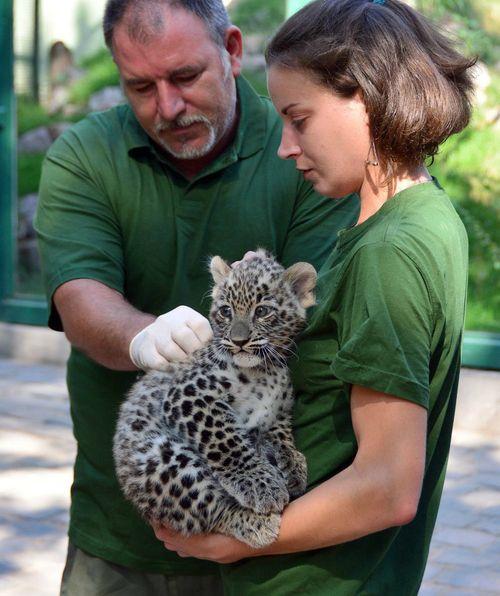 Leopardnevado02 foto Bagosi Zoltan