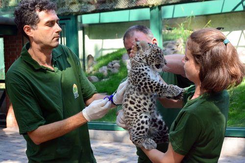 Leopardnevado03 foto Bagosi Zoltan