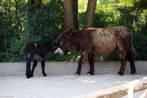 5 donkey