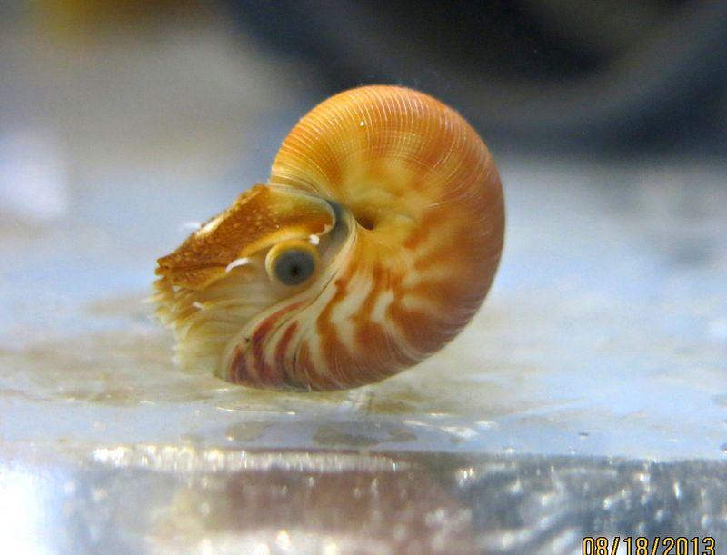 Nautilus Hi Res 1.jpg.jpg