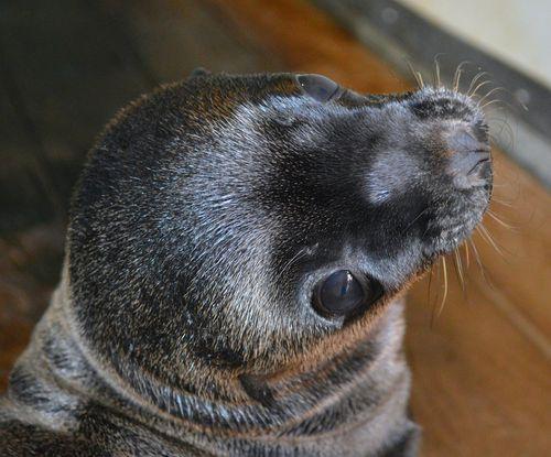 Milwaukee Sea Lion 2